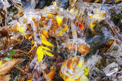 Autumn Ice In Color (rschnaible) Tags: fall colors landscape outdoor autumn forest blue ridge parkway north carolina the south ice mountains