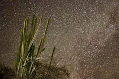 Noche estrellada en el Desierto (Engalochadox) Tags: colombia america desierto estrellas stars sky night captus hot dry seco liberdade liberdad desert huila tatacoa vialactea viaje viagem noche noite nocturna