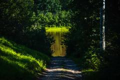 River Road Trees (Bracus Triticum) Tags: river road trees アルバータ州 alberta canada カナダ 8月 八月 葉月 hachigatsu hazuki leafmonth 2019 reiwa summer august