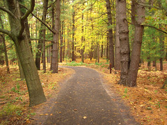 Through the woods (Bruces 51) Tags: whiting forest dow gardens midland michigan trail