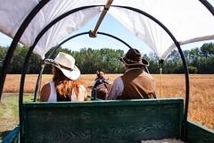 Wagon Drivers (Bracus Triticum) Tags: wagon drivers アルバータ州 alberta canada カナダ 8月 八月 葉月 hachigatsu hazuki leafmonth 2019 reiwa summer august