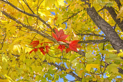 Autumn Color - Smyrna, Tennessee (J.L. Ramsaur Photography) Tags: jlrphotography nikond7200 nikon d7200 photography photo smyrnatn middletennessee rutherfordcounty tennessee 2019 engineerswithcameras autumncolor photographyforgod thesouth southernphotography screamofthephotographer ibeauty jlramsaurphotography photograph pic smyrna tennesseephotographer smyrnatennessee nature outdoors god'sartwork nature'spaintbrush god'screation fall autumn fallinthesouth tennesseefall fallcolors colorful red orange yellow brown fallseason autumncolors autumninthesouth fallleaves tennesseeautumn leaves autumnleaves leaf fallintennessee autumnintennessee