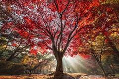 Beautiful tree (Eslegendario) Tags: