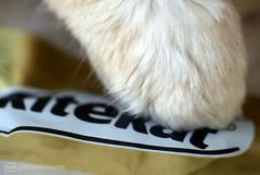 checking the brand (photos4dreams) Tags: macromondays macrolens brand chilli cat photos4dreams p4d photos4dreamz paw pfote katze