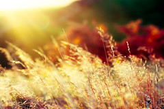 I though for a moment, summer had returned (tonguedevil) Tags: outdoor outside countryside autumn nature field meadow grass hillside colour light shadows sunlight sunrise