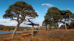 Loch Tulla, Scotland(2) (S.R.Murphy) Tags: glencoe landscape lochtulla oct2019 scotland water nature highlands fujifilmxt2 fujifilmxf1680mm tree trees lightroomcc stuartmurphy blackmount