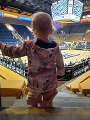 Watching the game (quinn.anya) Tags: eliza toddler ucberkeley basketball womensbasketball