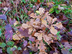 """Herbst am Fluss Iller / Autumn on the river Iller / Automne sur la rivière Iller (warata) Tags: 2019 deutschland germany süddeutschland southerngermany schwaben swabia oberschwaben upperswabia schwäbischesoberland """"badenwürttemberg"""" badenwuerttemberg pflanze hausgarten """"samsung galaxy note 8""""nature outside landscape garden herbst autumn"""