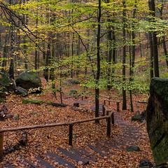 Herbstwald (Panasonikon) Tags: panasonikon sonya7 quadrat square wald forest treppe stufen felsen rock grün green laub herbst autumn elbsandsteingebirge landschaft landscape sächsischeschweiz ilce7 sonyalpha sel2870