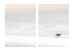One Tree Hill (Kath Salier) Tags: simple fox landscape soft cloud tree sonya7rii japan kathsalier kimberley wallart flickr snow
