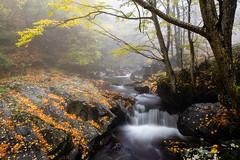 The misty autumn embrace (J.u.l.i.u.s.) Tags: nature new natur ngc inexplore fog forest landscape landscapes leafs autumn trees tree water wasser waterfall waterfalls