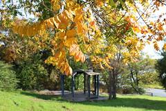 Ένα πάρκο κοντά στο σπίτι μου (Argyro Poursanidou) Tags: autumn leaves foliage nature yellow park φθινόπωρο φύλλα φύση πάρκο χαλκίδα