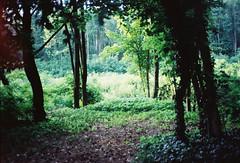 to the forests (Vinzent M) Tags: brandenburg deutschland zniv konica c35 af