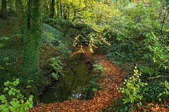 Nature's Art (aj.lindeboom) Tags: nature green autumn forest