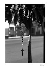 A Rosary Tree? (radspix) Tags: canon t90 fd 3570mm f4 arista edu ultra 100 pmk pyro