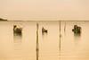 _Y2U4133.0719.Phá Tam Giang.Phúc Lộc.Thừa Thiên Huế (hoanglongphoto) Tags: lagoon asia asian vietnam tamgianglagoon thefishingboat boat sky water canon thừathiênhuế phúlộc phátamgiang bầutrời thuyền thuyềnđánhcá waterreflection phảnchiếu soibóng landscape scenery vietnamlandscape vietnamscenery phongcảnh nước afternoonsunshine sunny nắng happyplanet asiafavorites morning morningsunshine nắngsớm people landscapeandpeople người phongcảnhcóngười canoneos1dx canonef70200mmf28lisiiusm