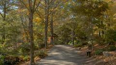 Gibbs Gardens (randyherring) Tags: gibbsgardens ballground ga cherokeecounty nature beauty fallcolors autumnleaves