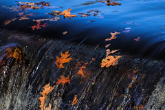Over the Falls. (WilliamND4) Tags: autumn leaves falls water nikon d810