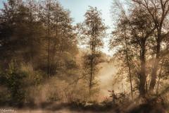 15102017-DSC_2249 (vidjanma) Tags: vellereux arbres automne brume lumière matin étang