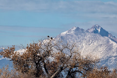 November 3, 2019 - Bald eagles dwarfed by the mountains. (Tony's Takes)