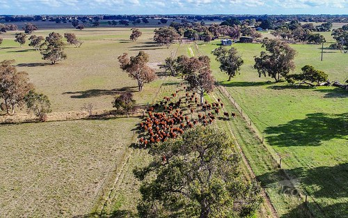 1591 Lucindale Road, Spence SA