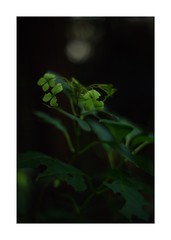 This work is 4/15 works taken on 2019/9/27 (shin ikegami) Tags: sony ilce7m2 a7ii sonycamera 50mm lomography lomoartlens newjupiter3 tokyo 単焦点 iso800 ndfilter light shadow 自然 nature naturephotography 玉ボケ bokeh depthoffield art artphotography japan earth asia portrait portraitphotography