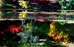 _DSC9440 Autumn beauty (christinachui79) Tags: fall autumn reflections colourful lake nikon dof serene flickr nature landscape waterscape reflection depthoffield richcolours autumncolourchange scenic autumncolours naturephotography fallcolours fallcolour landscapephotography fallseason autumncolour flickrnature autumnseason waterscapephotography outdoor november mirrorimage mirrorimages