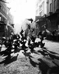 (sharmi_diya06) Tags: morning birds street streetphotography streetphot abstract light city shadow shadows people outside letsexplore