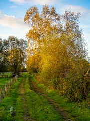 The Irish countryside in autumn. Grassy lanes and colourful hedges. (Adessoadesso) Tags: ireland autumn fall landscape scenery scenicdrive green