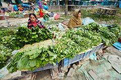 Nepal_2018_4937 (Robert Kielak/Photographer and filmmaker) Tags: agriculture asia asian bazaar business cabbage cauliflower coconutdrink coconutmilk coconuts color colorful editorial eggplant farmproducts farmersproduce food fresh fruit green greengrocer greengrocery harvestvegetables healthy local locallygrown man market marketplace okra organic portrait radish sale sell seller shop stall street streetlife streetvendors traditional typical vegetable vegetables vendor nepal kathmandu
