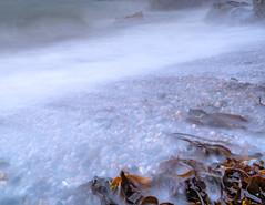 There was kelp and stones and rocks and things (Gullivers adventures) Tags: kelp rocks stones le weed seascape waves sea ocean pebbles seaweed velvet wash adventure trek