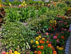 Botanischer Garten Breslau - Botanical Garden Wroclaw (fleckchen) Tags: blumen blüten blooms garden garten botanischergarten breslau wroclaw polen schlesien botanicalgarden pflanzen natur