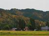 rural scene in autumn (murozo) Tags: 鵜養 秋田 uyashinai akita autumn tint tree house thatch roof 秋 紅葉 木 茅葺き