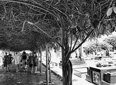 DSC00564 (O KDUKO) Tags: araraquara blackandwhite blackandwhitephotography pictureoftheday blackandwhitephoto photography bnwcaptures monochrome monochromatic bw bwstyles artgallery visualart bwphotooftheday photoshoot bwstyleoftheday aesthetics streetphotography arts