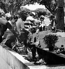 DSC00546 (O KDUKO) Tags: araraquara blackandwhite blackandwhitephotography pictureoftheday blackandwhitephoto photography bnwcaptures monochrome monochromatic bw bwstyles artgallery visualart bwphotooftheday photoshoot bwstyleoftheday aesthetics streetphotography arts