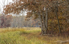 Rusty Autumn Scene...... (Kevin Povenz Thanks for all the views and comments) Tags: 2019 october kevinpovenz westmichigan allegan outside outdoors fall autumn field trees rust rusty grass canon7dmarkii scene landscape