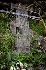 Cleveland Zoo Waterfall (Myusername432) Tags: waterfall water zoo cleveland rainforest plants