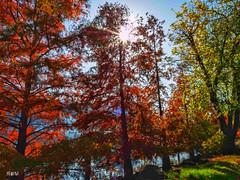 Autunno la natura cambia pelle. (iw2ijz) Tags: autunno colori controluce riflessi natura panasonic outdoor lumix gx8 olympus 12mm lago lake diseo bergamo lombardia 2019