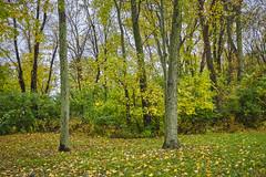 Punchy Autumn Colors (Modkuse) Tags: nature natural art artphotography artistic artisticphotography photoart fineartphotography fineart velvia fujifilmxt2velvia fujifilmxt2velviasimulation captureone captureonefujifilmsimulation colorful colors fujifilm fujifilmxt2 xt2 fujinon fujinonxf1855mmf284rlmois xf1855mmf284rlmois autumn autumnleaves autumnlandscape fall fallcolors fallcolor