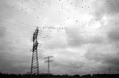 Strommasten (tom-schulz) Tags: ricoh grii monochrom bw sw berlin thomasschulz strommast himmel wolken vögel
