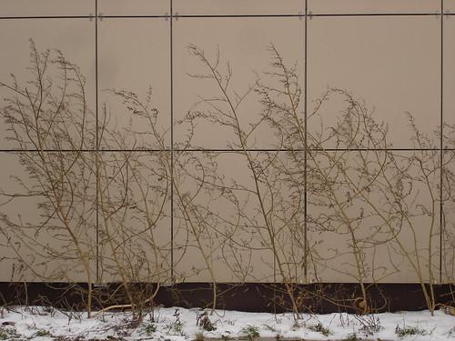 Ноябрьская растительность ©  ayampolsky