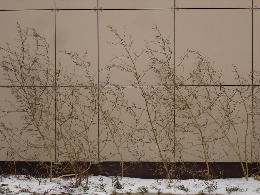 фото: Ноябрьская растительность