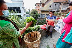 Nepal_2018_4915 (Robert Kielak/Photographer and filmmaker) Tags: agriculture asia asian bazaar business cabbage cauliflower coconutdrink coconutmilk coconuts color colorful editorial eggplant farmproducts farmersproduce food fresh fruit green greengrocer greengrocery harvestvegetables healthy local locallygrown man market marketplace okra organic portrait radish sale sell seller shop stall street streetlife streetvendors traditional typical vegetable vegetables vendor nepal kathmandu