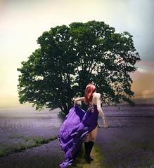 Miss Violet (jaci XIV) Tags: alfazemas pessoa mulher paisagem árvore lavenders person woman landscape tree