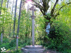 Stage 2 Roncesvalles-Zubiri French Way | Way of Saint James (asanza23n) Tags: french way saint james the pilgrim pilgrims navarra camino de santiago frances