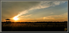 Gone to the dogs (WanaM3) Tags: wanam3 sony a700 sonya700 texas houston harriscounty elfrancoleepark park outdoors sundog clouds vista observationplatform evening dusk twilight sun sunset