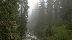 A foggy day in the forest (ab.130722jvkz) Tags: italy trentino alps rhaethianalps adamellopresanellaalps mountains trees atmosfericevents