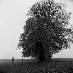 Sti, Lyngebækgård, Nivå (Lars_Holte) Tags: zenza bronica s2a slr 50mm f35 superkomura 6x6 square squareformat 120 film 120film kodak d76 analog analogue foma fomapan fomapan100classic 100iso mediumformat blackandwhite classicblackwhite bw ishootfilm monochrome filmforever filmphotography larsholte homeprocessing gossen profisix sbc danmark denmark nivå trees