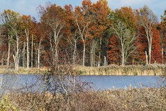 THE AUTUMN LANDSCAPE...SUMMIT COUNTY, OHIO (fstopfinatic) Tags: pointandshoot panasoniczs70 flowage water silky dreamy sun clouds sky graceful misty calm mood forest tree decay lake pond bog marsh swamp wetland nature outdoor landscape view beautiful scenery