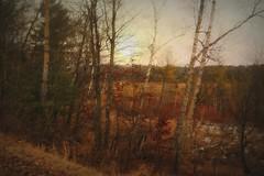 November Sun (A. Walden) Tags: m gt g ggv